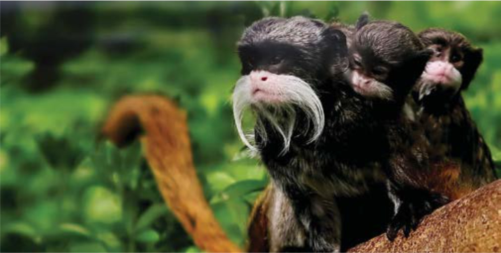 The Wildlife of Brazil